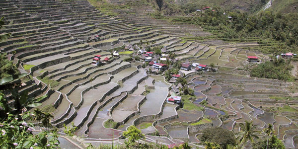 Reisterassen bei Batade auf den Philippinen